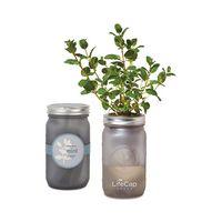 786338871-112 - Modern Sprout Indoor Herb Garden Kit - Ice Blue - thumbnail